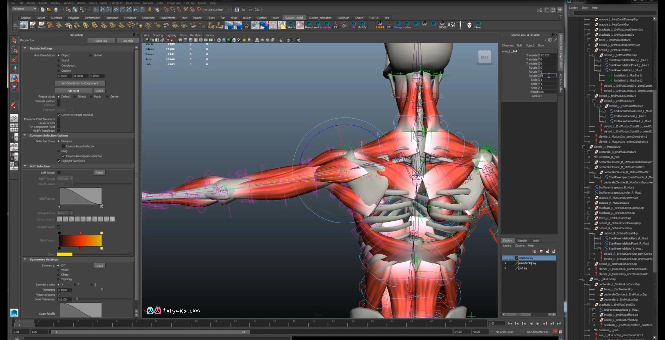 Анатомический скилет для анимации